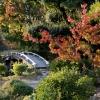 秋の渉成園