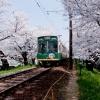 嵐電の桜トンネル
