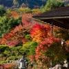 大河内山荘の紅葉
