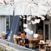 桜咲く高瀬川